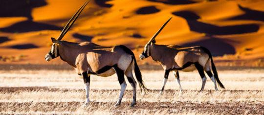 Opter pour la Namibie
